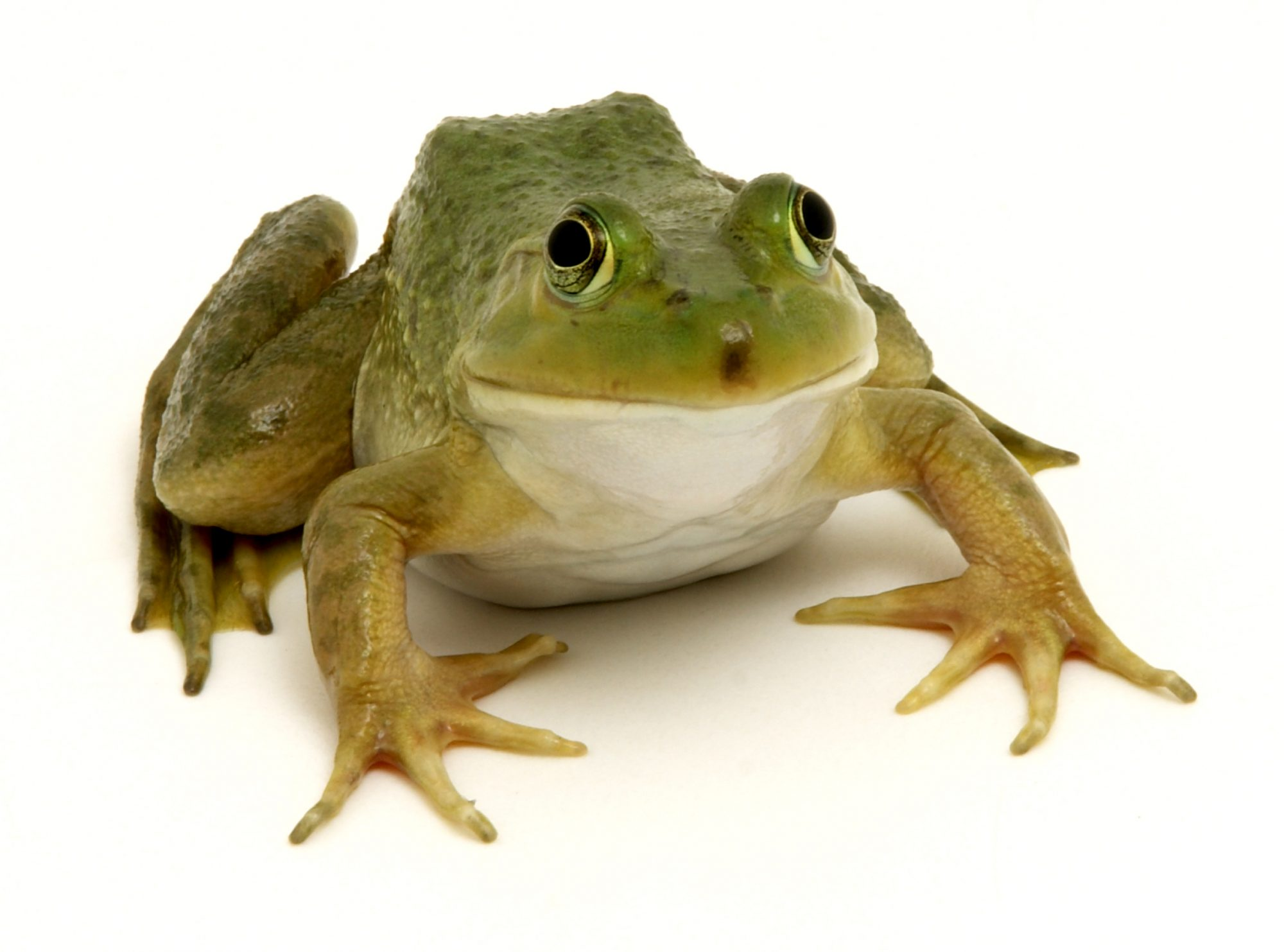 Don't Be a Well Frog