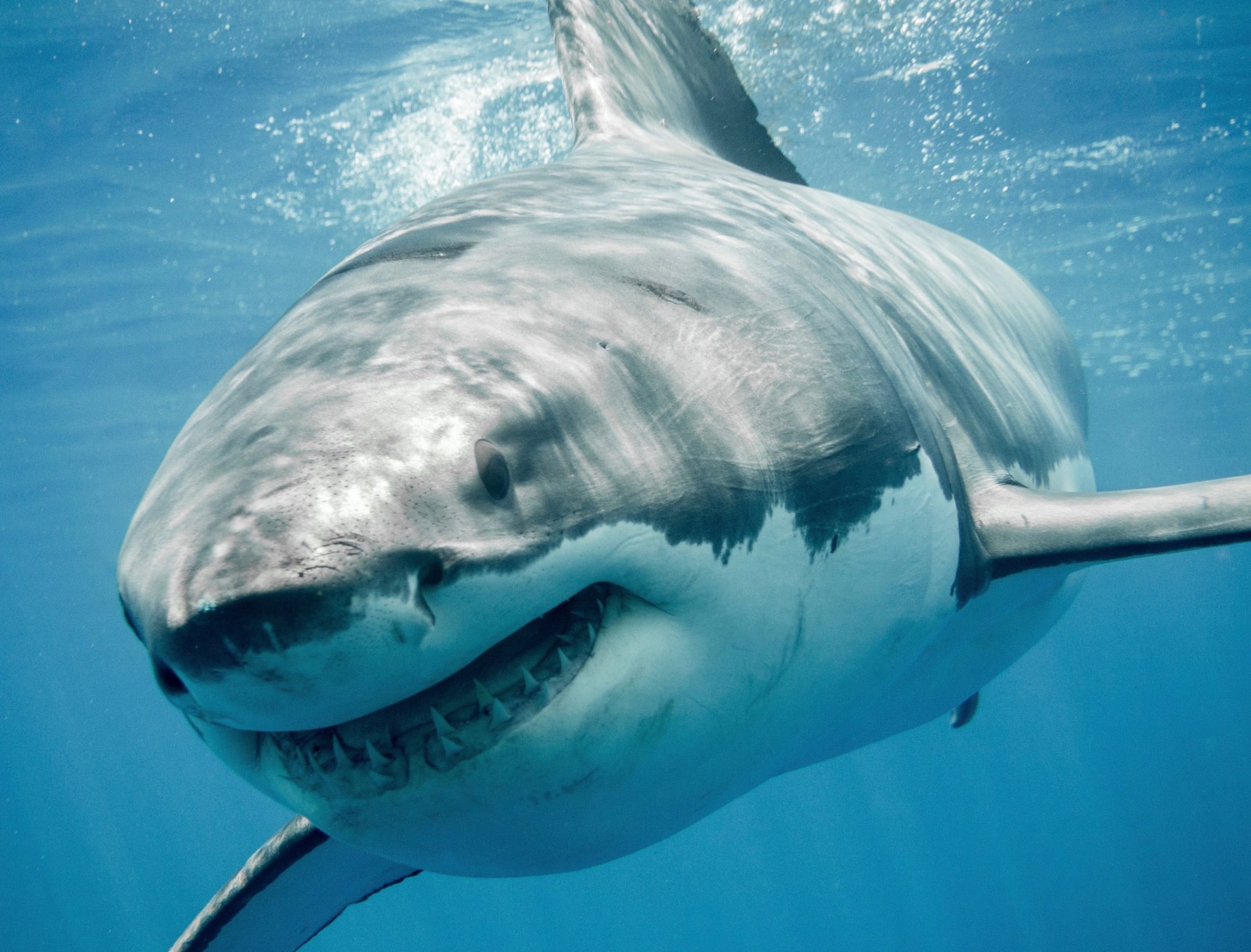 How to Win in the Shark Tank and Not Get Eaten Alive